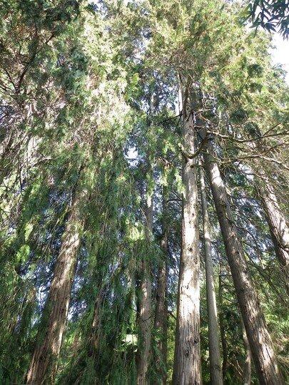 Anduze (30) - Comment se sentir tout petit à la Bambouseraie